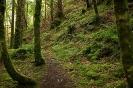 Torc Wood