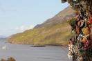 Fairy tree...Killary Fjord